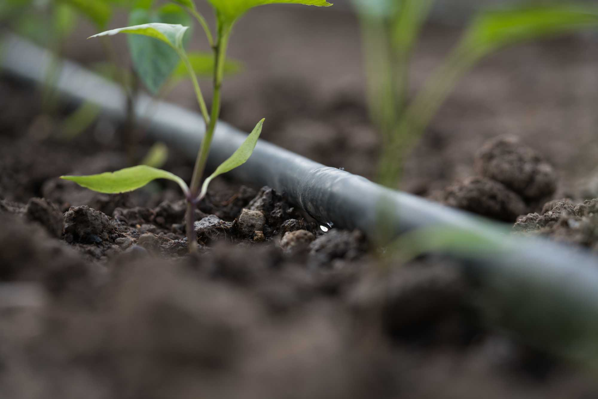 irrigazione SVAI_tubazioni irrigazione agricola